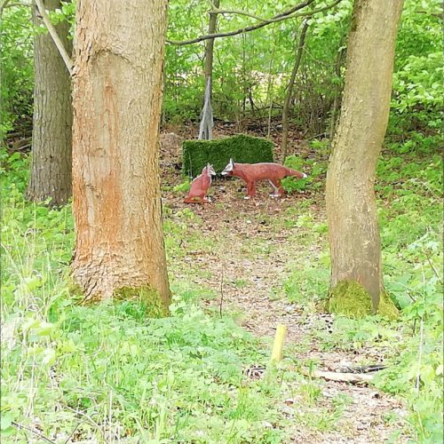 Scheibe 31 Füchse